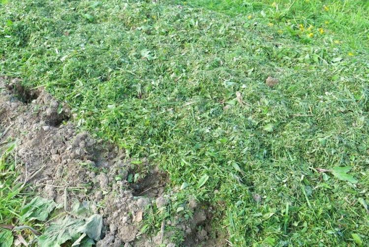 Покос травы: как использовать скошенную траву
