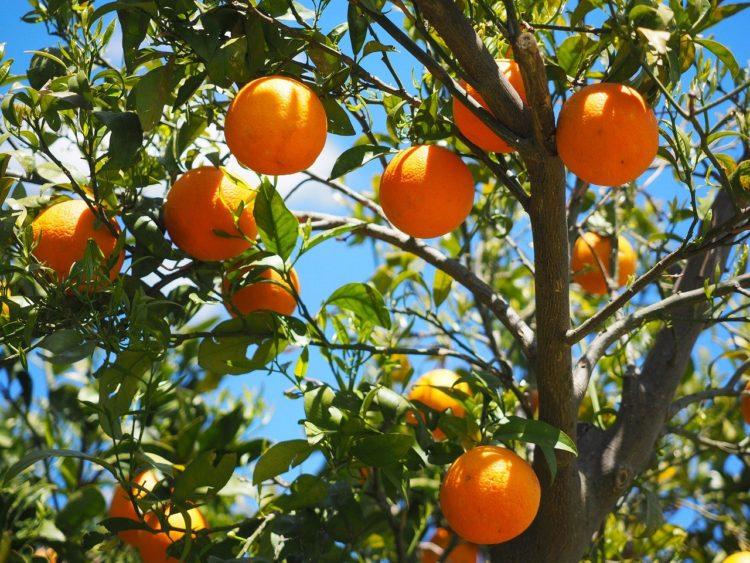 апельсин польза и вред